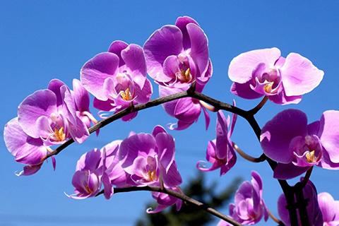 Cách nhận biết các loại Lan đẹp của Việt Nam