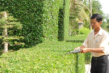 Hướng dẫn trồng, chiết, giâm và ghép cành, rễ bonsai